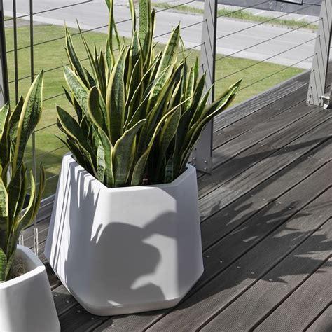 vasi grandi per piante scegliere i vasi per piante da esterno scelta dei vasi