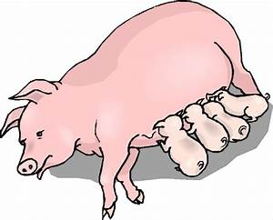 Baby Piglet Clipart | Clipart Panda - Free Clipart Images