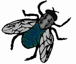 Se Débarrasser Des Mouches Naturellement : nandrinois comment se d barrasser des mouches avec des r pulsifs naturels nandrin ~ Melissatoandfro.com Idées de Décoration