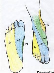 Foot Dermatomes