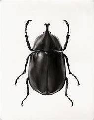 Egyptian Scarab Beetle Drawings