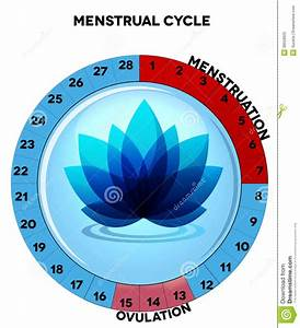Blue Menstrual Cycle Chart With Flower Stock Vector