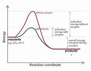 Définition Four Catalyse Pyrolyse : types of catalysts kinetics article khan academy ~ Premium-room.com Idées de Décoration