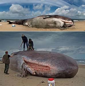 Dec 28, 2008: Whale Penis - The Cellar
