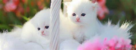 Cute Cats Facebook Cover Coversden