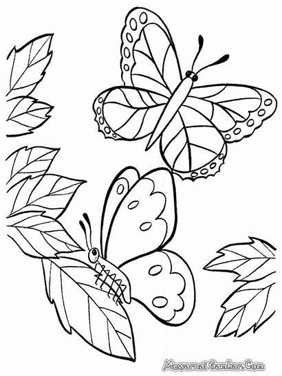 Gambar Mewarnai Kupu Bunga Sketsa Untuk Dan
