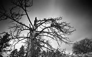 Sad Black and White Tree Wallpaper