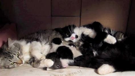 Two New Mama Cats With New Kittens Join Forces