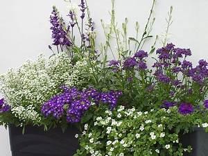 Künstliche Blumen Für Balkonkästen : balkon gestaltung mit wei en und blaun pflanzen blumen ~ A.2002-acura-tl-radio.info Haus und Dekorationen