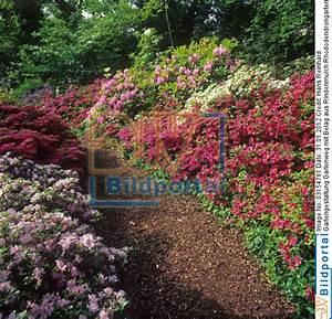 Rindenmulch Als Gartenweg : details zu 0003154781 gartengestaltung gartenweg mit ~ Lizthompson.info Haus und Dekorationen