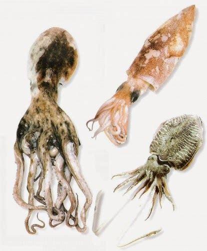 cuisiner le calamar a la bascule une des meilleures poissonneries de bruxelles