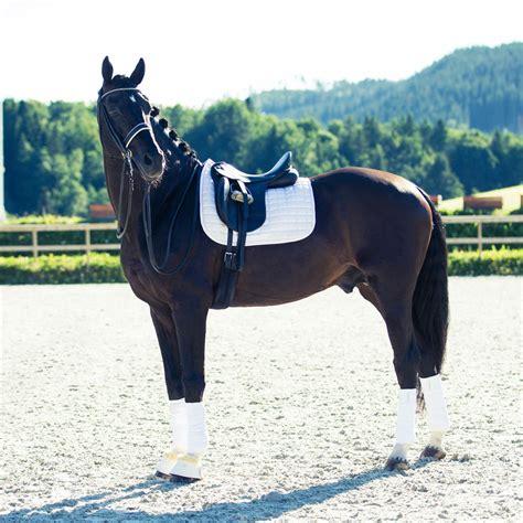 pad horze saddle dressage pads pony horse colours purpose ashbree
