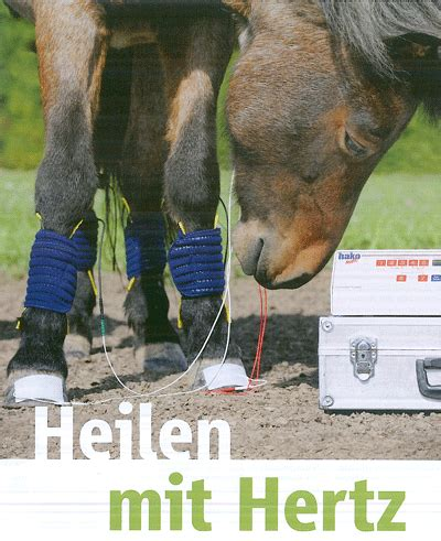 Horizontal Therapie Pferd