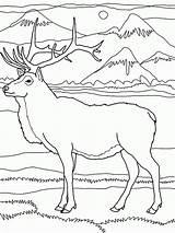 Coloring Elk Rocky Mountains Mountain Deer Printable Drawings Drawing Coloringhome Super Natale Adult Wapiti Regard Running Sheets Popular Designlooter Lion sketch template