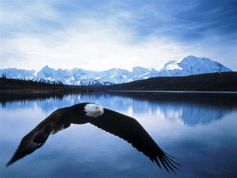 The Top 5 National Parks in Alaska | Natural Creations