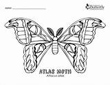 Moth Coloring Atlas Pages Outline Colouring Surface Coloringbay Area Pdf Result Google sketch template