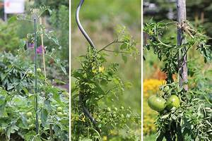 Tomaten Rankhilfe Selber Bauen : tomatenst be die rankhilfe f r tomaten ~ A.2002-acura-tl-radio.info Haus und Dekorationen