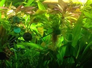 Pflanzen Für Aquarium : pflanzen f r kleines aquarium co2 anlage kaufen finde jetzt die f rs aquarium ~ Buech-reservation.com Haus und Dekorationen