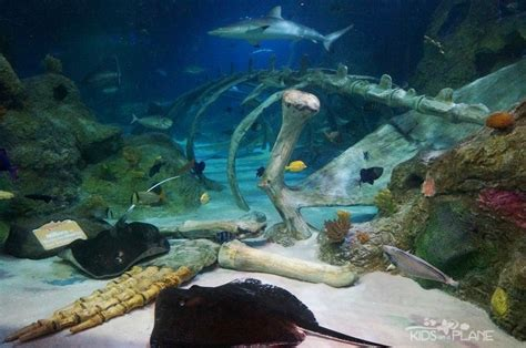 sea aquarium 2 for 1 5 things to do with in grapevine