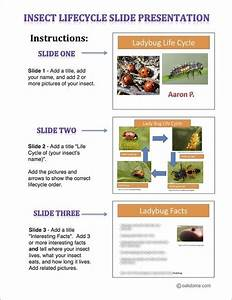 Insect Lifecycle Student Instructions
