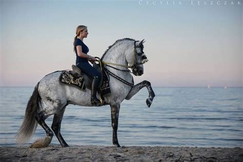 horse andalusian pre horses pretty escudero vii dressage know karolina ferenstein everything need lusitano amazing cavalos bridle andalusians stallion bonitos