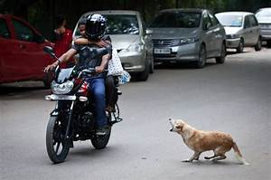 India, Stray, Dogs, Are, A, Menace