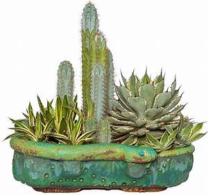 Pot A Cactus : truly unruhly concrete pots succulents and other crafts ~ Farleysfitness.com Idées de Décoration