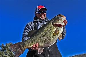 New Record Catch Confirmed Florida Bass Hybrid