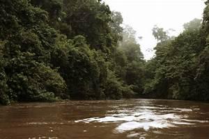 Controle Technique Petite Foret : la for t amazonienne de bas en haut carnet d 39 aventures en amazonie fran aise ~ Medecine-chirurgie-esthetiques.com Avis de Voitures
