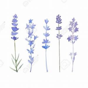 Aquarell Malen Blumen : die besten 25 blume aquarell ideen auf pinterest ~ Articles-book.com Haus und Dekorationen