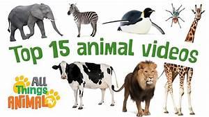 Top 15 Animal Videos