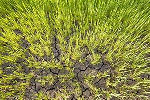 Que Planter En Juin : jardin que planter dans un sol sec ~ Melissatoandfro.com Idées de Décoration