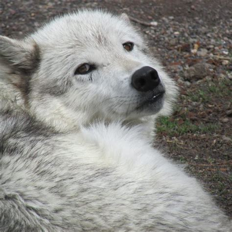 recommended reads books describe return  wolves