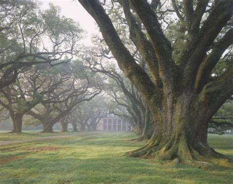 1000+ Images About Under The Live Oaks. On Pinterest