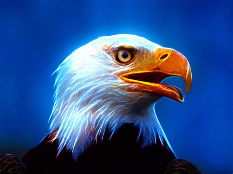 american flag  eagle wallpaper  images