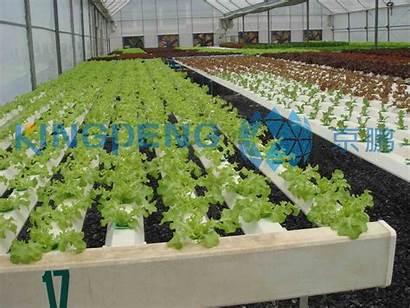 Hydroponic Vegetables Culture Soil Nutrients Root Fertilizer