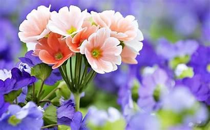 Bunga Cantik Gambar Indah Untuk Keren Anak