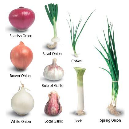 types of onions white onion vs yellow onion