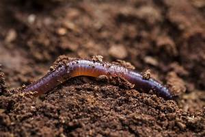 What Are Worm Beds and How Do I Make One?
