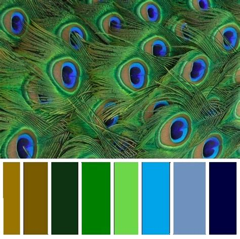 peacock colors peacock color scheme i want this for our kitchen color