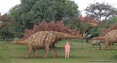 Stegosaurus By Sameerprehistorica On Deviantart