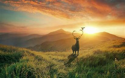 Deer Sunset Mountain Field Mountains Wallpapers Scenic