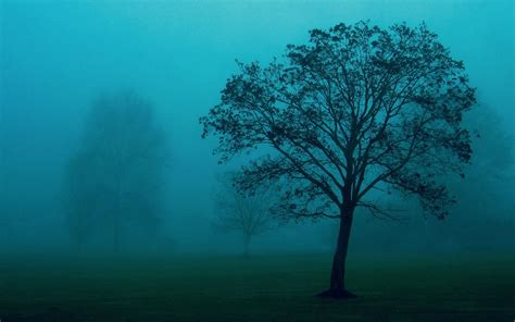 Background Images Of Trees by Wallpapers Trees In The Mist