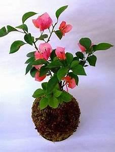 Kokedama Selber Machen : 286 best kokedama moss balls images on pinterest string garden gardening and terrariums ~ Orissabook.com Haus und Dekorationen