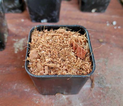 ดินปลูกแคคตัส สำหรับมือใหม่ สูตรดินโปร่ง ระบายน้ำได้ดี ราก ...