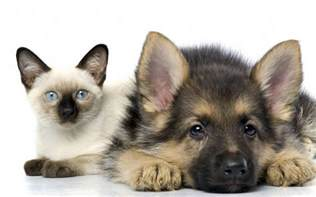 dogs cats animal wallpapers and cat
