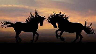 Horse Nature Animals Wallpapers Sunset Mustang Desktop