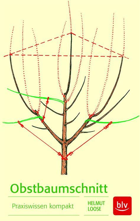 apfelbaum schneiden wassertriebe wann soll die baeume schneiden