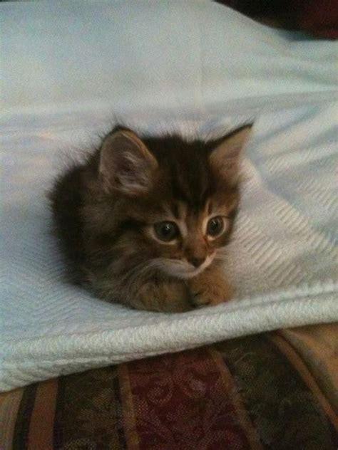 kitten   bed luvbat