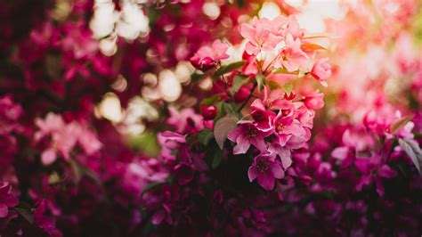 wallpaper pink flowers blossom flora  flowers  wallpaper  iphone android
